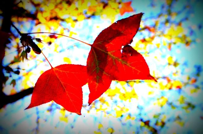 glow of autumn