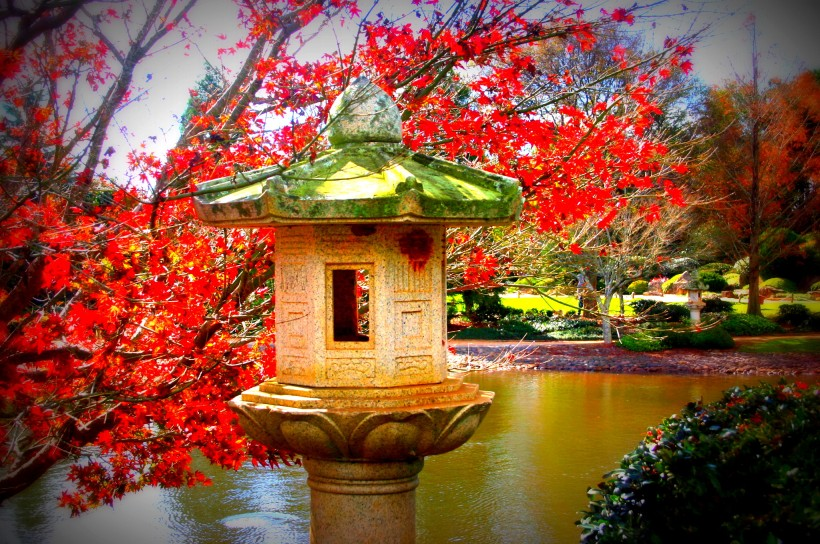 stone lantern and maple